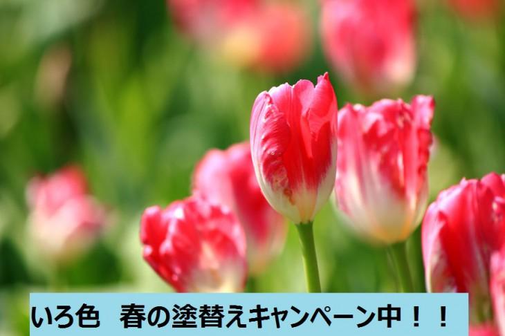 春の塗替えキャンペーン中